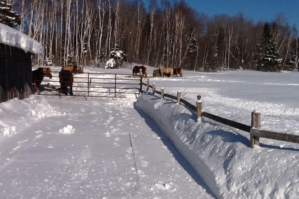 Winter at the Nearby Barn
