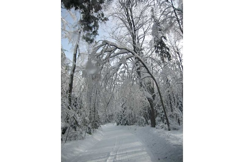 Laneway in Winter