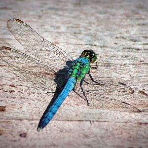 Bugs & Critters in Cottage Country